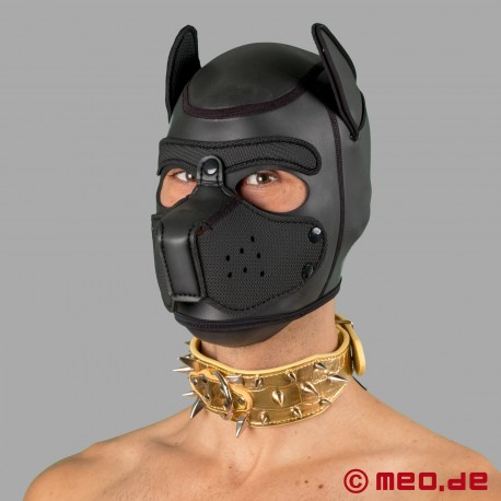Gold spiked collar for the human pup